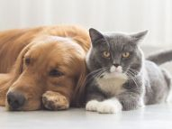 dogs-and-cats-snuggle-together-royalty-free-image-578593548-1553616085